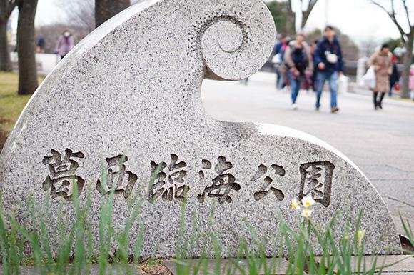 水仙まつり(葛西臨海公園)